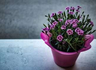 smart plant system using iot